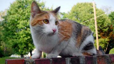Ceux qui veulent nourrir les chats auront besoin d'une carte délivrée par la ville de Namur