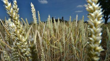 Le son, c'est-à-dire l'enveloppe du grain de blé, offre des propriétés méconnues. C'est pour les utiliser que le projet Valaxson a été porté par le pôle de compétitivté Wagralim