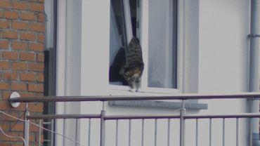 """Un chat coincé dans une fenêtre sauvé grâce à la mobilisation d'un groupe Facebook: """"Il hurlait à la mort"""""""