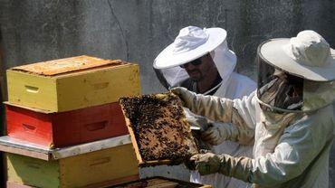 Apiculteurs examinant une ruche