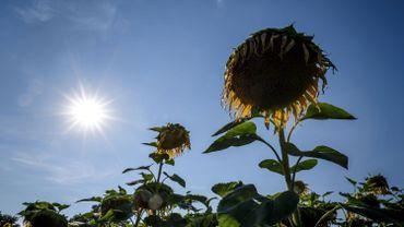 Les températures vont monter jusque 35 degrés samedi.
