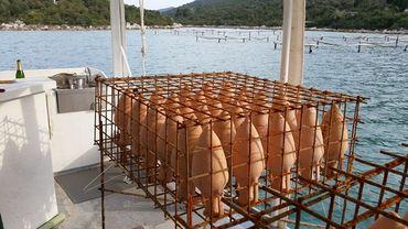 Plonger pour visiter un chai sous-marin en Croatie