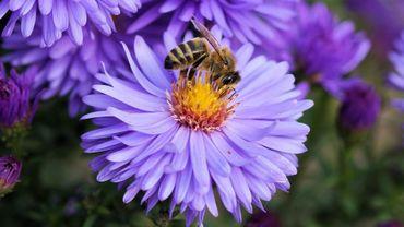 Dans le cadre de la quinzaine des Abeilles et des pollinisateurs du 18 mai au 2 juin, La maison Seronval donne une conférence sur les abeilles à Liers