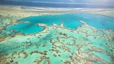 Inscrite au patrimoine mondial de l'Unesco en 1981, la Grande barrière s'étend sur environ 345.000 km2 le long de la côte australienne et constitue le plus vaste ensemble corallien du monde.