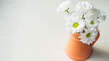 Plante d'intérieur du mois : le chrysanthème