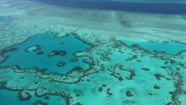 """Hécatombe """"castastrophique"""" de coraux dans la Grande barrière"""
