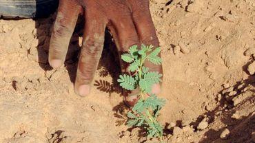 Plus d'arbres que prévu au Sahara et au Sahel, selon une étude.