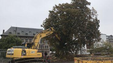 Namur: Les arbres malades du Grognon sont tombés