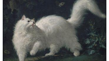 Une expo virtuelle consacrée aux chats