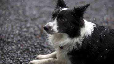 Le parlement bruxellois octroie un statut juridique pour protéger les animaux