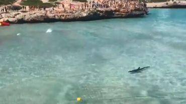 Le requin mesurait entre deux et trois mètres de long.