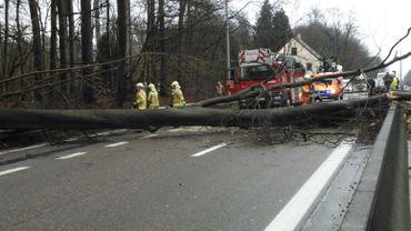Rafales de vent: un arbre est tombé sur le ring de Bruxelles