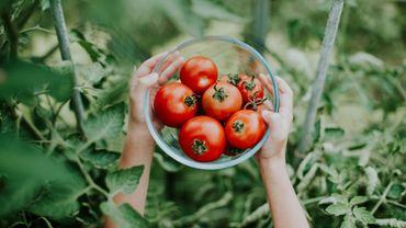 Recette de Candice: Tomates farcies aux escargots et au chèvre