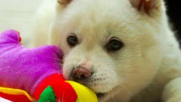 Refuge pour animaux: faire appel à un photographe professionnel pour favoriser l'adoption?