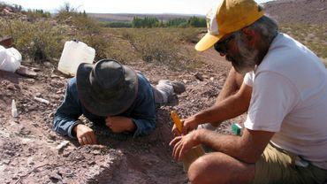 Des chercheurs ont découvert une nouvelle espèce de dinosaur dans la province de Neuquen en Argentine. Photo mise à disposition par l'agence CTyS le 2 novembre