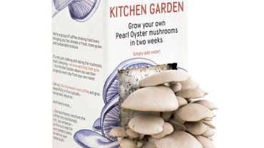 Le Flash tendance de Candice : Faire pousser ses champignons dans sa cuisine