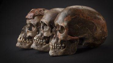 Trois crânes retrouvés à Dolni Věstonice en République tchèque et datés 31.000 ans. Attribué à la culture gravettienne (Vénus de Willendorf), ils sont étroitement liés aux autres individus gravettiens analysés provenant de Belgique, de la République tchèque, de l'Autriche ou de l'Italie.