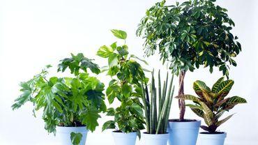 Cinq plantes à offrir pour la fête des pères.