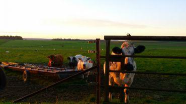 L'exploitation est modeste: 25 hectares essentiellement destinés à laisser paître des vaches laitières.