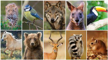 TEST : quel est votre animal totem ?