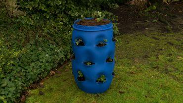 Une jardinière à fraisiers toute en hauteur à partir d'un tonneau de récupération