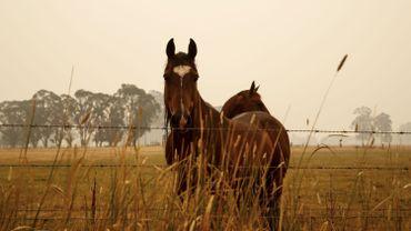 Papouilles, bonbons et déguisements au refuge « 100 chevaux sur l'herbe».