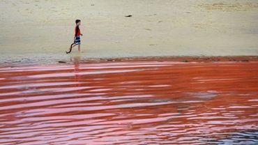 Une algue rouge irritante prolifère sur les plages de Sydney