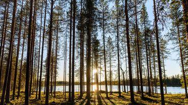 """Les forêts du """"Grand Nord"""" sont, elles aussi, menacées par le changement climatique."""