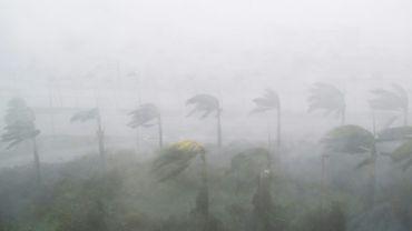 Les vents de l'ouragan ont violemment secoué les arbres et entre 30% et 70% des orangers ont perdu des fruits