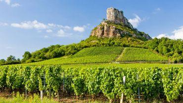 """La vigne bourguignonne """"est un marqueur du réchauffement climatique"""", selon une étude."""