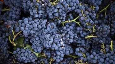 Ces Bruxellois qui font du vin
