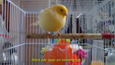 Laurent Quillet#2 CONVERSATION D'UNE VIE BANALE ( titi, question pour un champion, etc. ), vidéo copie - à voir au MiLL