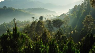 Le recul de la forêt africaine s'accélère selon la FAO