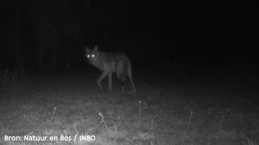 La louve Naya, observée pour la dernière fois en mai dernier