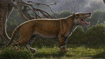 """Image fournie par l'Université d'Ohio le 18 avril 2019 d'un """"Simbakubwa kutokaafrika"""", l'un des plus grands mammifères carnivores terrestres"""