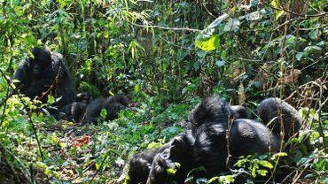 RDC: au moins six gardes tués par des hommes armées dans le parc national des Virunga