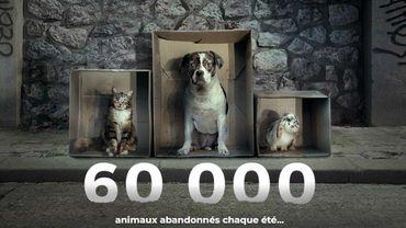 France : la campagne choc contre les abandons signée 30 millions d'amis (vidéo)