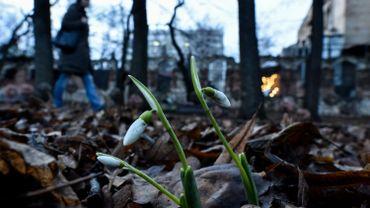 Des perce-neige poussent parmi un feuillage d'automne à Moscou, le 24 décembre 2015. La ville connaît un hiver exceptionnellement doux avec des températures à des niveaux record