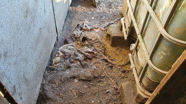 Un squelette d'animal découvert dans un abri de fortune