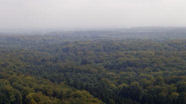 La forêt de Soignes prend racine au patrimoine de l'Unesco
