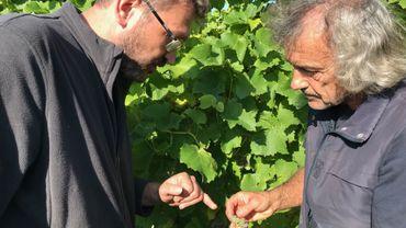 Le formateur Jean-François Lénelle (à droite) expose les techniques d'analyse du degré de maturité du raisin à un des ses élèves.