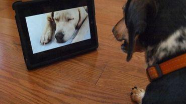 Un chien regarde Dog TV