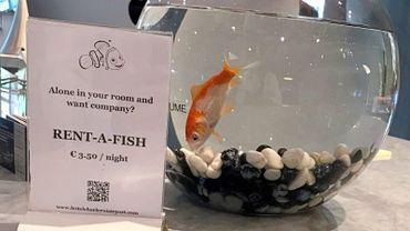 La Presque Star : David Dillen, pour la location de poisson rouge