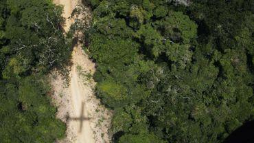 Brésil: le plus grand défricheur clandestin de l'Amazonie a été arrêté