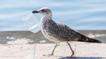 6 objets à supprimer de son quotidien pour moins polluer