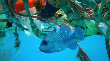 La pollution plastique : véritable fléau de nos océans