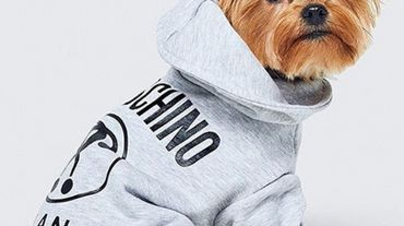 Sweatshirt de la collection H&M x Moschino