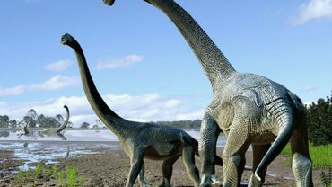 Des paléontologues ont annoncé le 20 octobre 2016 la découverte en Australie d'os fossilisés d'une espèce de dinosaure géant inconnue jusqu'à présent, Savannasaurus elliottorum, ici représentés en dessin par un artiste