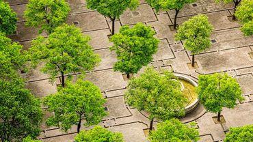 Les forets urbaines : tendance mais pas si simple !Planter des arbres en ville, oui mais comment?