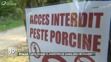 """Un élevage """"clandestin"""" de sangliers à quelques kilomètres du foyer de peste porcine: """"C'est un hobby, pas une production"""""""